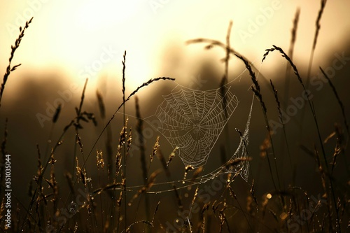 Obraz na płótnie Spider Web On Grass
