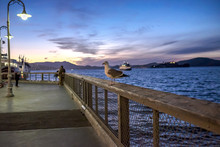 Side View Of Seagull Perching On Pier Railing At Dusk