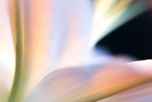 Flower Color Abstract Out Of Focus Dark Moody