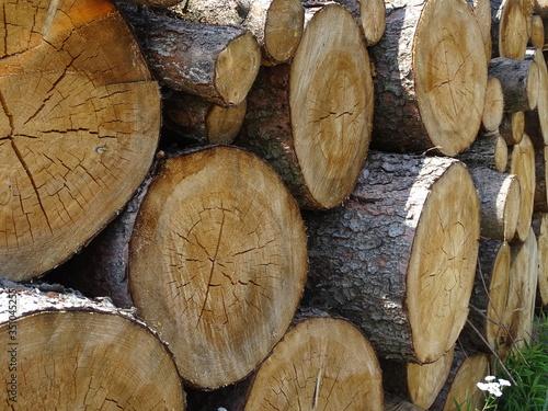 Obraz Wycinka drzew - fototapety do salonu