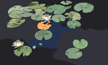 Water Lily With Lily Pads