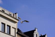 Antwerpen Straat Fotografie