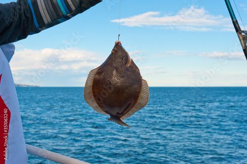 Canvastavla Sea fishing - flounder fishing, Kamchatka.