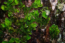 Green Moss On A Tree Trunk Cal...