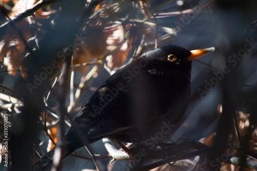 Close-up Of Black Bird Perching On Tree Fototapete