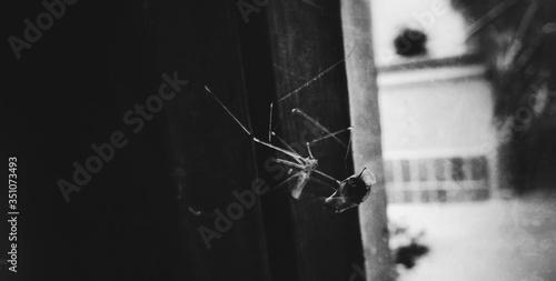 Spider In Alley Fototapeta