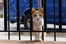 Cat Innocent Face Curious Star...