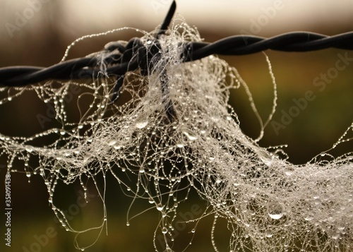 Foto Close-up Of Wet Spider Web On Barbed Wire