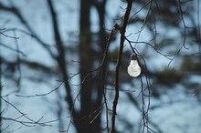 Light Bulb Hanging On Bare Tree