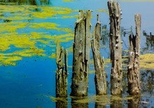 Close-up Of Wooden Post In Lake