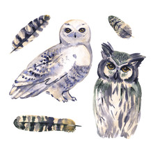 Watercolor Owl Set Painting. Hand Painted Realistic Illustration Isolated On White Background. Realistic Forestry Bird Art.