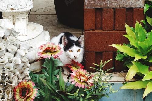 Photo Alert Cat In Yard