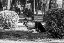 Low Section Of Person Sitting With French Bulldog At Park