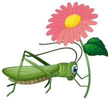 Grasshopper Holding Pink Flower