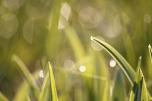 Grass Field Wallpaper In Sunny...