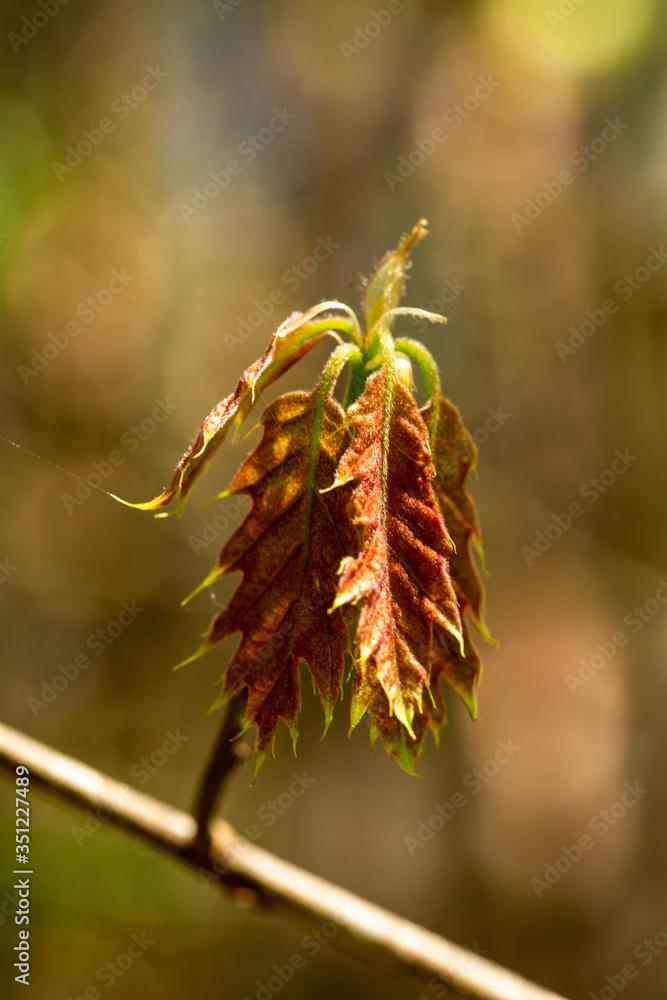 Młode liście w słońcu