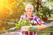 Happy Senior Woman In Summer At Gardening