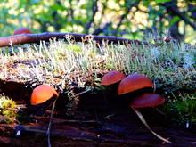 Close-up Of Mushrooms And Moss...
