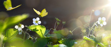 Art Blooming Wild Strawberry F...