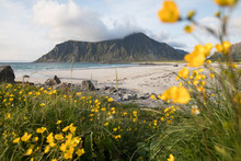 Flowers On Flakstad Beach In L...