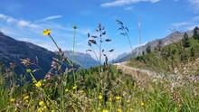 Wildflowers Growing On Mountai...