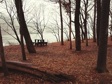 Empty Picnic Table Amidst Bare Trees At Park