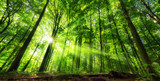 Fototapeta Las - Vibrant panoramic scenery of illuminated foliage in a lush green forest, with vibrant colors and rays of sunlight