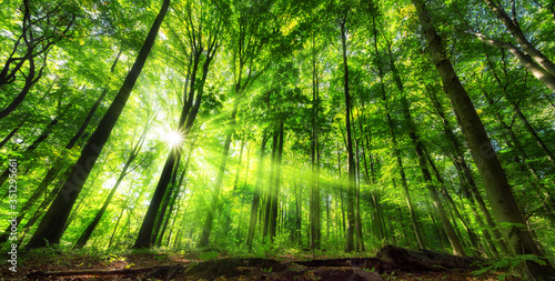 Obraz na plátně Vibrant panoramic scenery of illuminated foliage in a lush green forest, with vi