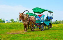 The Horse-drawn Carriage On Th...