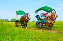 The Horse-drawn Carriages, Bog...