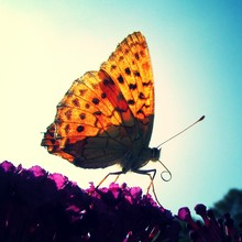 Extreme Close-up Of Butterfly On Flowers In Park