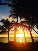 Silhouette Palm Trees At Sea Shore Against Sky During Sunset