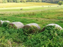 View Of Rolled Up Hay Bales On Field