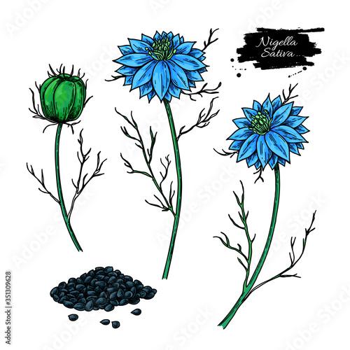 Fototapeta Nigella sativa vector drawing. Black cumin isolated illustration. obraz