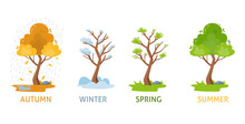Four Seasons Of Tree. Autumn, Spring, Summer, Winter. Vector Illustration Isolated.