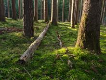 Austria, Tyrol, Lans, Fallen Tree Lying On Mossy Forest Floor