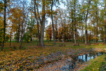 Beautiful park with a small pond in autumn. Many trees with colorful (from green to red) autumn leaves, many leaves have fallen and lie on the green grass.