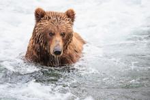 USA, Alaska, Katmai National P...