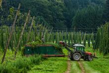 Germany, Bavaria, Attenhofen, Hop Harvest