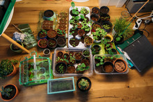 Assortment Of Plants On Wooden...