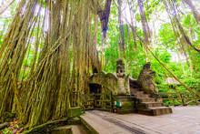 The Sacred Monkey Forest, Home...