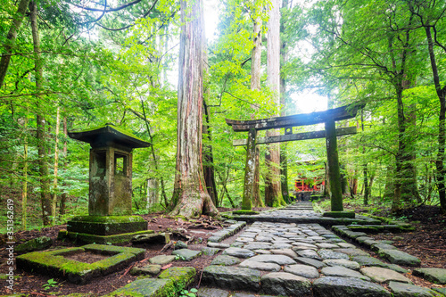 Kitano Shrine torii gate, Nikko, UNESCO World Heritage Site, Tochigi prefecture, Honshu, Japan, Asia - 351362619