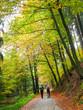 Deutschland, Sachsen, Sächsische Schweiz, Wanderer im Herbstwald