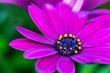 canvas print picture - Close-up Of Pink Flower