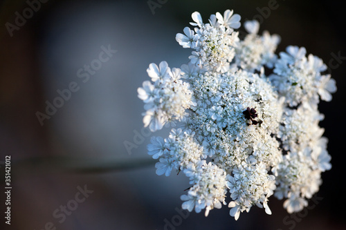 Romantic Emotional Natural Flora White Flowers