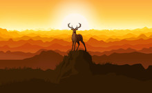 Deer Standing On A Stone