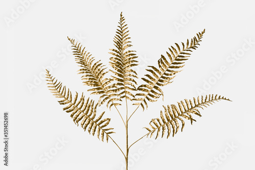 Fototapeta Golden leatherleaf fern plant on an off white background