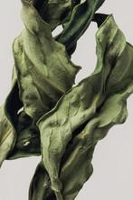 Dried Peony Leaf On A Gray Background