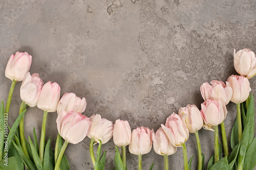 Fototapeta Flatlay light pink white tulips on light gray textured background. Flat lay, top view, copy space. Spring, fresh, nature. Creative minimal, floristic shop Woman's Day Mother's St. Valentine's Day obraz na płótnie