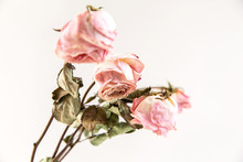 Three Dried Rose Buds On A Gre...